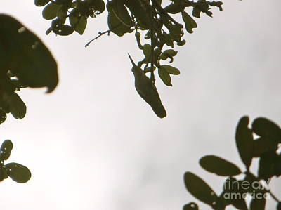 Art Print featuring the photograph Hummingbird Silhouette 1 by Joy Hardee