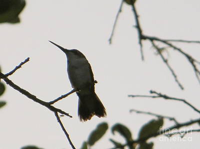Art Print featuring the photograph Hummingbird Silhouette 2 by Joy Hardee