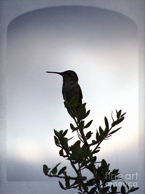 Photograph - Hummingbird Silhouette Sunrise Art Print by Ella Kaye Dickey