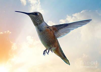 Photograph - Hummingbird Sky by Carol Groenen