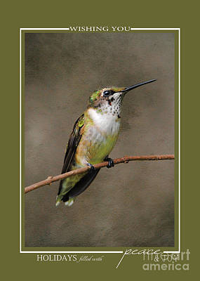Photograph - Hummingbird Song Bird Wildlife Christmas Cards by Jai Johnson