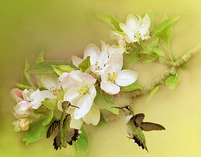 Photograph - Hummingbird Spring by TnBackroadsPhotos