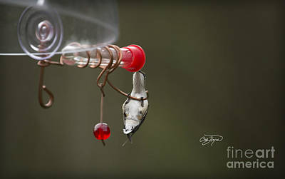Photograph - Hummingbird Stretch by Cris Hayes
