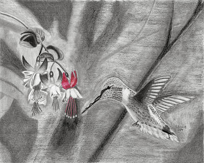 Drawing - Hummingbird by Susan Schmitz