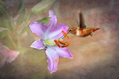 Hummingbird Sweets Art Print by Mary Timman