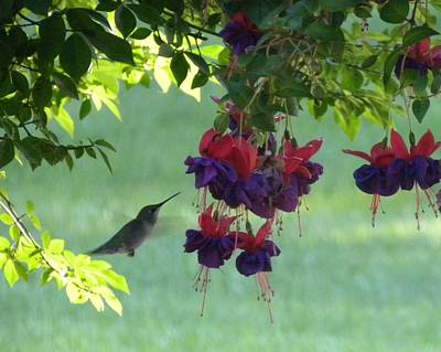 Art Print featuring the photograph Hummingbird by Teresa Schomig