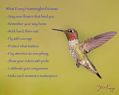 Photograph - Hummingbird Wisdom by Steve Kaye
