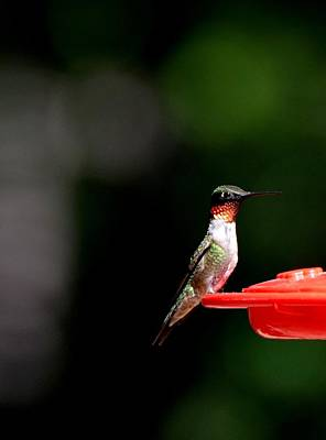 Colorful People Abstract Royalty Free Images - Hummingbirds 492 Royalty-Free Image by Lawrence Hess