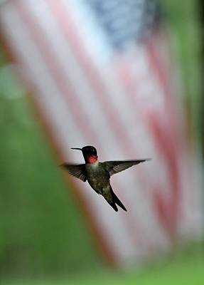All You Need Is Love - Hummingbirds 66 by Lawrence Hess