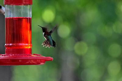 Train Photography - Hummingbirds 88 by Lawrence Hess
