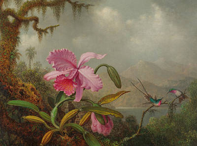Apple Blossom Painting - Hummingbirds And Orchids by Martin Johnson Heade