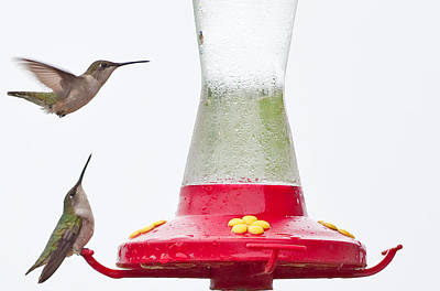 Wyalusing Photograph - Hummingbirds At Wyalusing State Park In Wisconsin by Natural Focal Point Photography