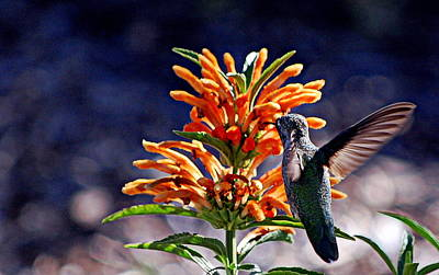 Photograph - Hummingbirds Delight by AJ  Schibig