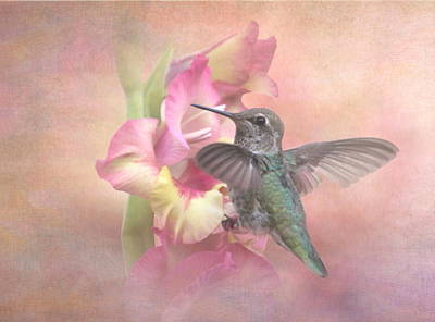 Hummingbirds Gladiola Art Print by Angie Vogel