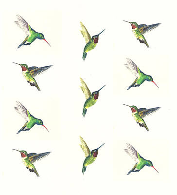 Birds Painting Rights Managed Images - Hummingbirds Number 2 Royalty-Free Image by Michael Vigliotti