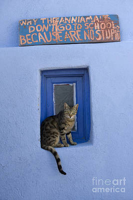 Photograph - Humorous Cat Sign by Jean-Louis Klein and Marie-Luce Hubert