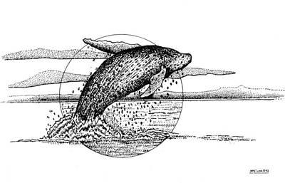 Humpback Whale Drawing - Hump Back Whale by Brian Gilna