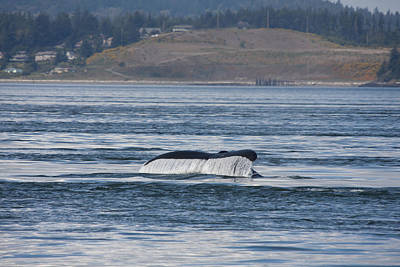 Photograph - Humpback Whale - 0010 by S and S Photo