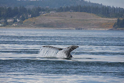 Photograph - Humpback Whale - 0012 by S and S Photo