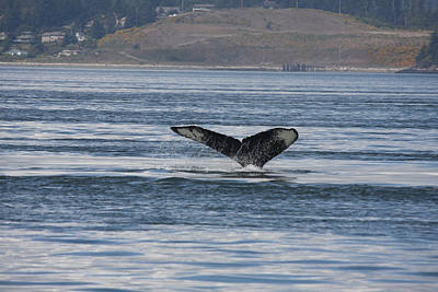 Photograph - Humpback Whale - 0014 by S and S Photo