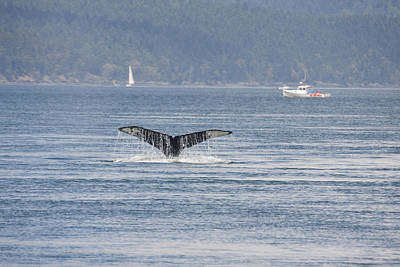 Photograph - Humpback Whale - 0018 by S and S Photo