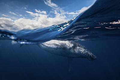 Deep Sky Photograph - Humpback Whale And The Sky by Barathieu Gabriel