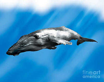 Painting - Humpback Whale by John Mabry