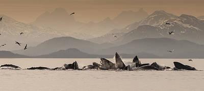 Humpback Whales Gulp Feeding Auke Bay Art Print
