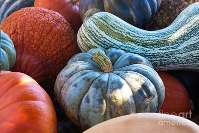 Photograph - Humungous Edible Gourds by Barbara McMahon