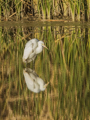 Photograph - Hunched Up White Heron by Jean Noren