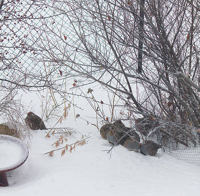 Photograph - Hungarian Partridge Huddle by Donna Munro