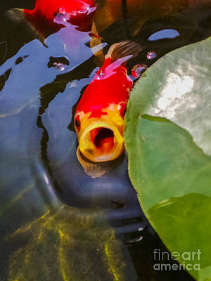 Photograph - Koi by Charlie Cliques