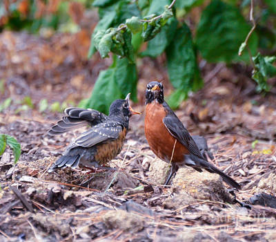 Bird Photograph - Hungry Baby Robin by Kerri Farley