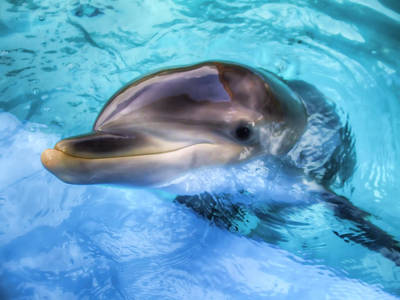 Art Print featuring the photograph Hungry Dolphin by Tim Stanley