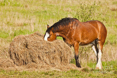 Horse Photograph - Hungry Horse by Liz Leyden