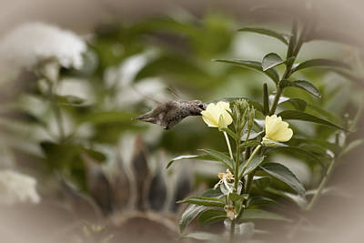 Photograph - Hungry Hummingbird by Bonnie Bruno