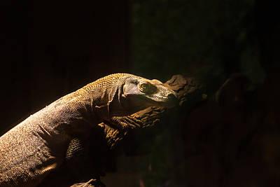 Photograph - Hungry Komodo Dragon by Douglas Barnett