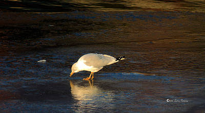 World Forgotten - Hungry Seagull by Larry Ferreira