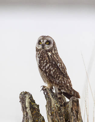 Photograph - Hunters Eyes by Doug Lloyd