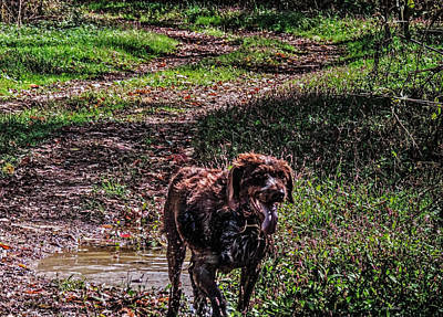 Photograph - Hunting Dog Bruno by Cathy Jourdan