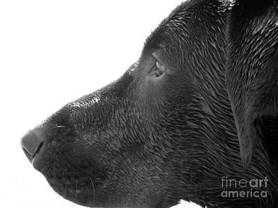 Hunting Dog Art Print
