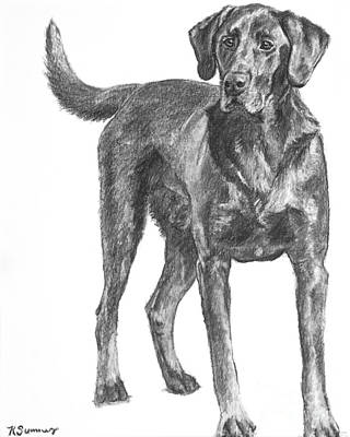 Drawing - Hunting Dog Labrador In Full Body Pose by Kate Sumners