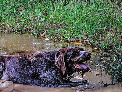 Photograph - Hunting Dog Mud Bath by Cathy Jourdan
