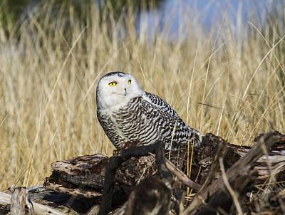 Photograph - Hunting Perch by Doug Lloyd