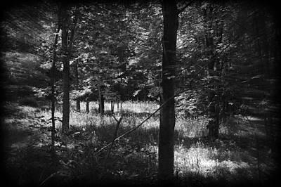 Photograph - Hunting... by Rhonda Barrett