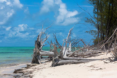 Photograph - Hurricane Blown Trees At North Bimini by Ed Gleichman