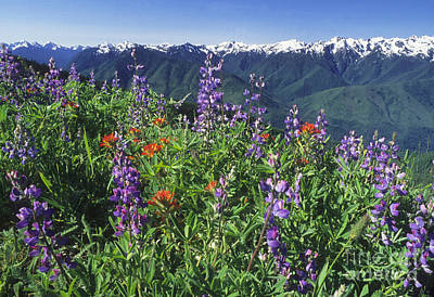 Photograph - Hurricane Ridge by Richard and Ellen Thane