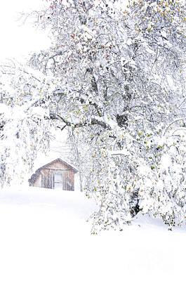 Virginia Snow Photograph - Hurricane Sandy Blizzard by Thomas R Fletcher