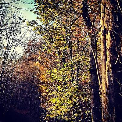 Forest Wall Art - Photograph - Hurst Woods by Nic Squirrell