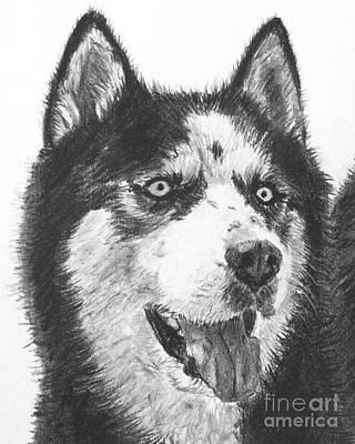 Husky Drawing - Husky Drawing by Kate Sumners
